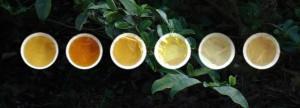 Tea Colours